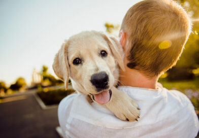 EU clarifies rules for travelling with pets from the UK